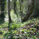 The Grove 1